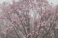 九皇山…雾里看花