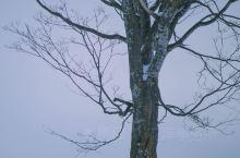 北海道必打卡 一定要找到的网红树