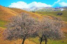 有时间还是要去新疆走一走,看看天池,看看杏花,看看卡湖
