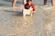 海边嬉戏的小狗和孩子