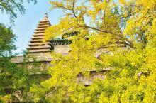 北京赏秋/600岁银杏古树下的小众寺庙