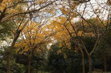 去共青森林公园拍美图