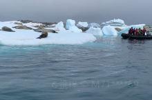 南极冰面上晒太阳的海狮