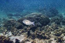 马来西亚Manukan岛两日游