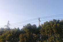 小鸟在枝头唱歌!风景很美