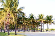 迈阿密~罗德岱堡的海滩,傍晚。沙滩上,晒太阳、打排球的,海面上掠过的白色的帆船,林立的桅杆,夕阳如血