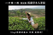 福建霞浦攻略 | 茶、山、海、牛、鹅、渔