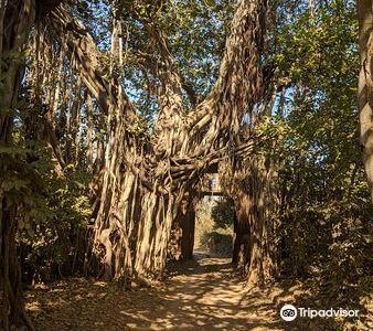 倫騰博爾國家公園