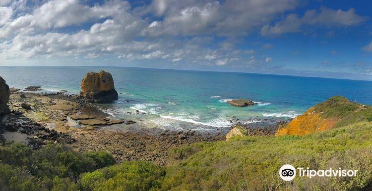 Great Ocean Road Wildlife Park1