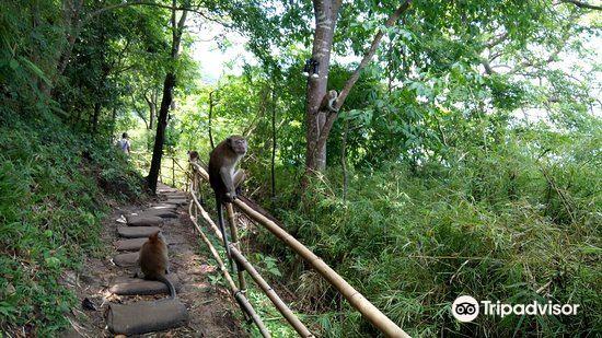 Monkey Trail1