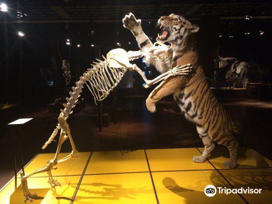 Naturhistorisk Museum2