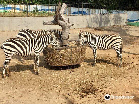 연태남산공원동물원1