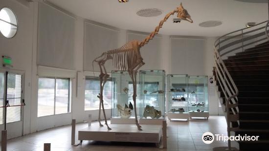 Museo de Ciencias Naturales y Antropológicas Juan Cornelio Moyano3