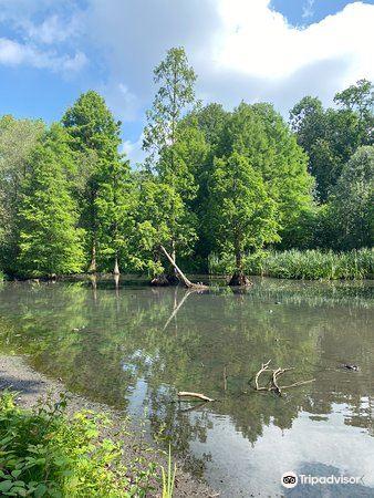 Botanischer Garten Rombergpark3