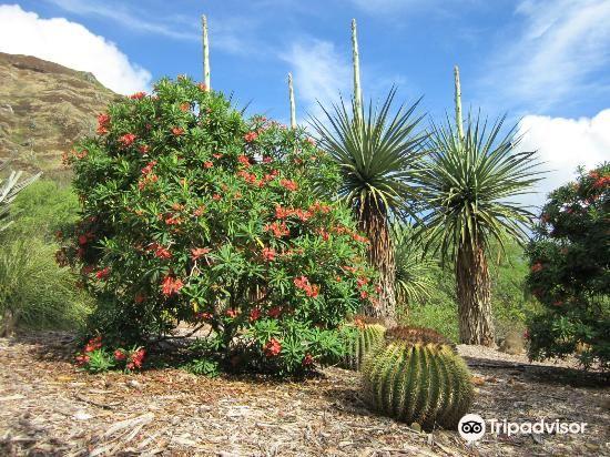 可可火山口植物園1