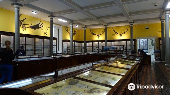 National Museum of Ireland - Natural History1