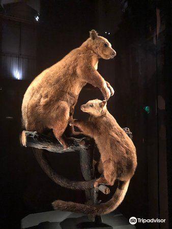 進化大陳列館4