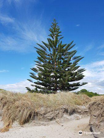 Waihi Beach2