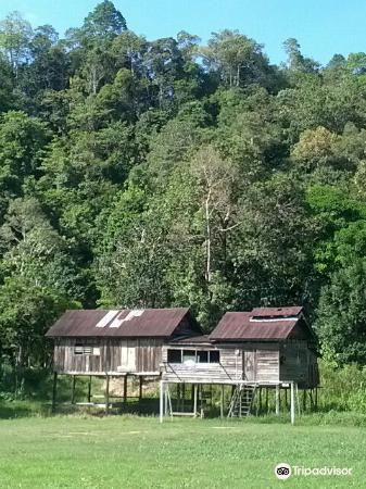 Kinabatangan Jungle Camp1