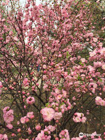 Baoding Botanical Garden4