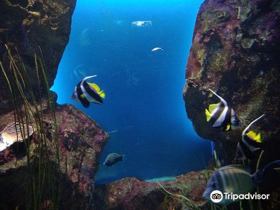 大水族館3