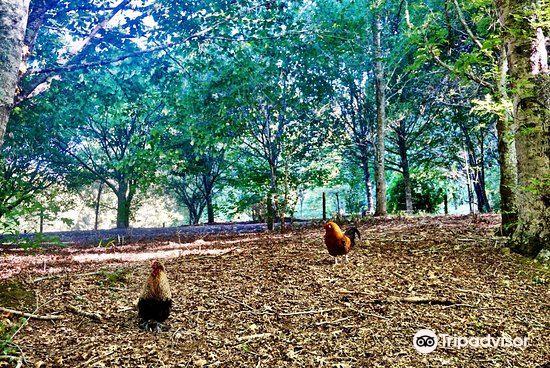 Taitua Arboretum4