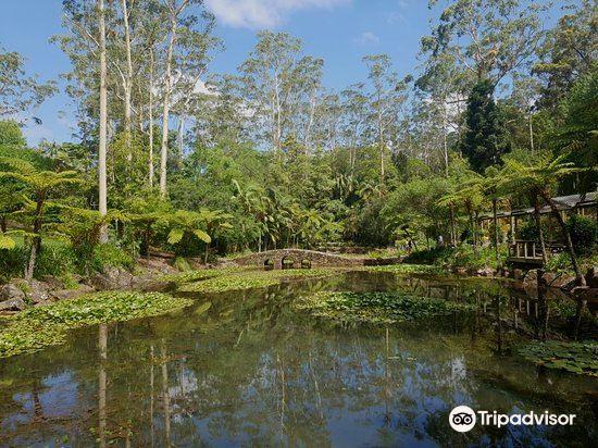 Tamborine Mountain Botanic Gardens3