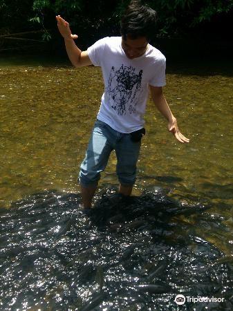 Sungai Moroli Fish Massage1