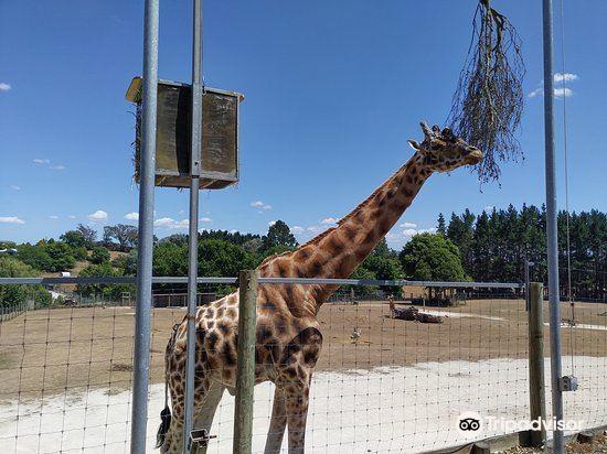 漢密爾頓動物園2