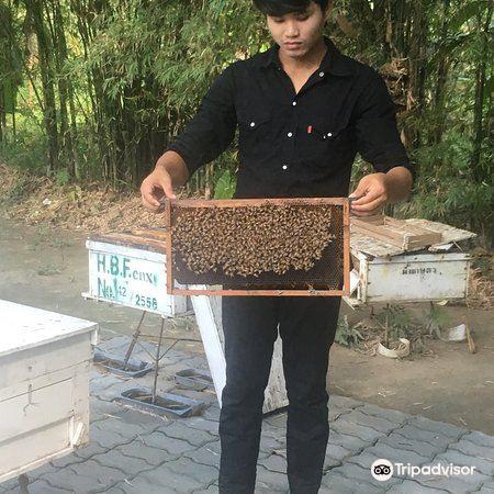 Big Bee Farm2