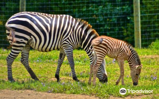Hamilton Zoo3