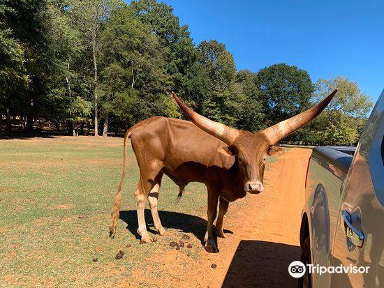 Cherokee Trace Drive-Thru Safari1