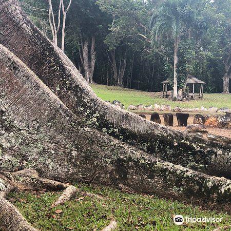 Parque Ceremonial Indigena de Caguana3
