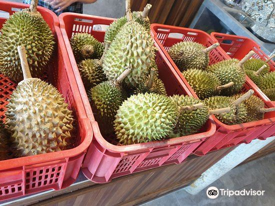 Jimmy's Durian Orchard4