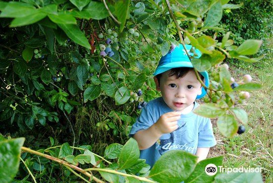 Blueberry Country3