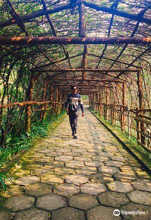Qixingshan Forest Park1