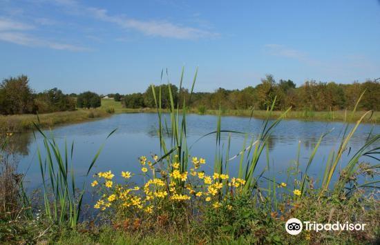Mineola Nature Preserve2