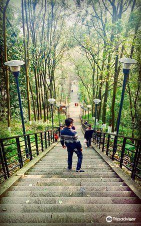 Qixingshan Forest Park3