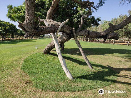 Karachi Golf Club3