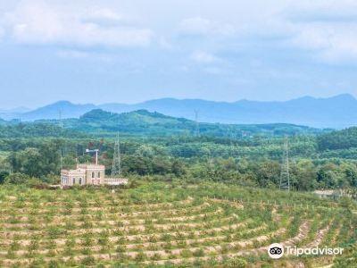 Wolong Mountain
