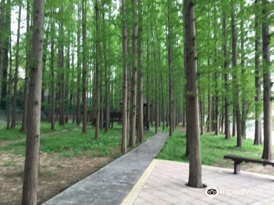 Jinniu Park4