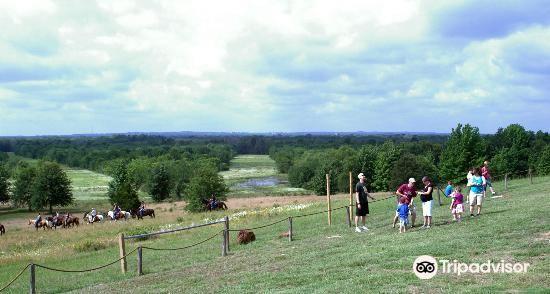 Mineola Nature Preserve3
