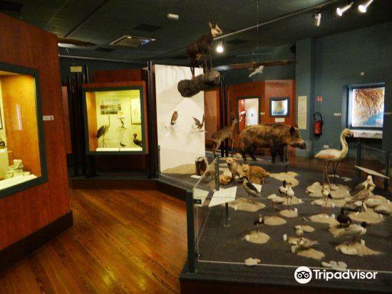 自然歷史博物館3