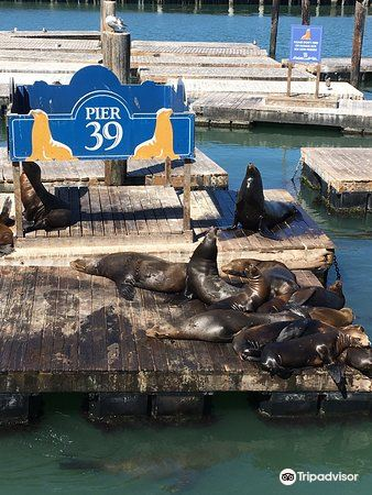 Sea Lion Center2