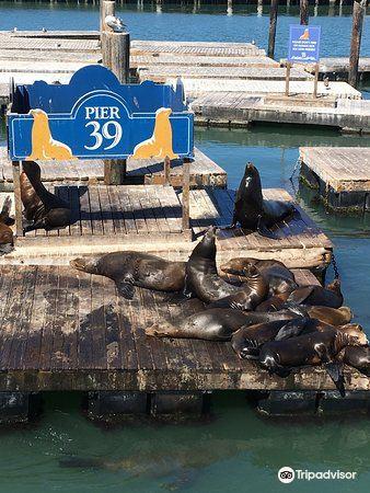 Sea Lion Center2