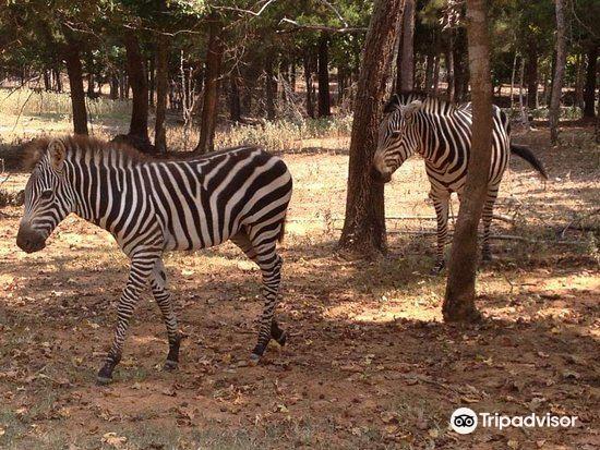 Cherokee Trace Drive-Thru Safari4