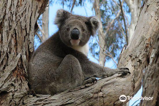 Hanson Bay Wildlife Sanctuary2