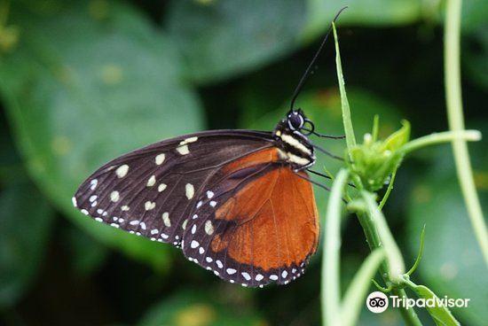 Butterfly Conservatory2