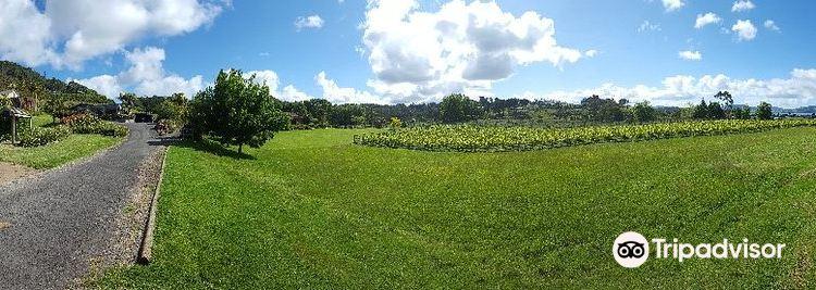 Mercury Bay Estate Winery1