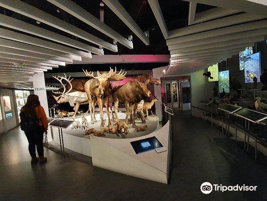Naturhistorisk Museum3